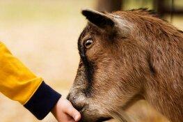 Eerste editie Open Boerderij-dag op kinderboerderij Dierendorp