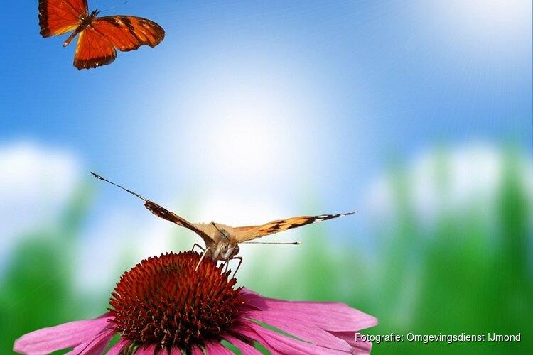 Vlinder en fladder op kinderboerderij Dierendorp in Heemskerk