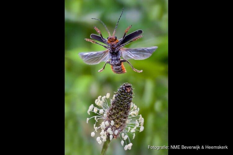 Insectenlezing voor volwassenen op 28 mei in het Koetshuijs