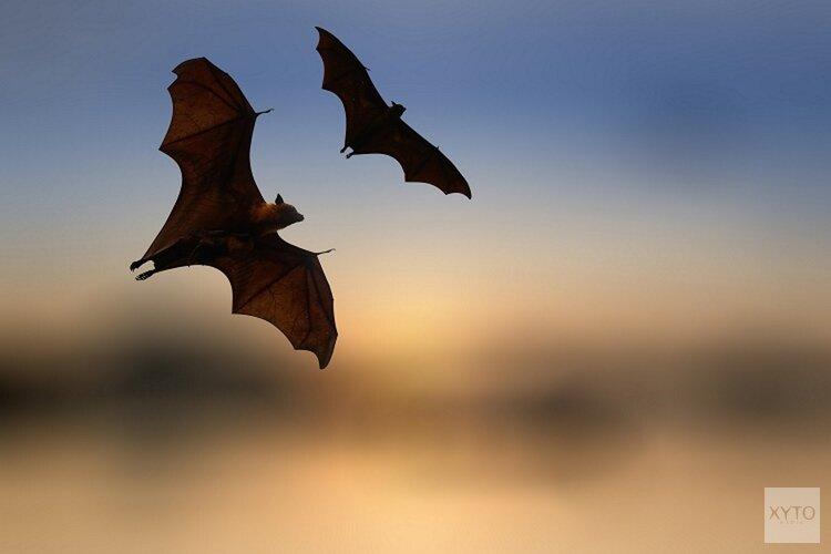 Ontmoet de nachtbrakers tijdens Nacht van de vleermuis in Heemskerk